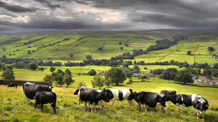 How Do You Lease Land for Cattle Pasture?