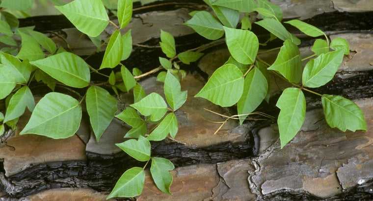 What Is a Treatment for Poison Ivy?