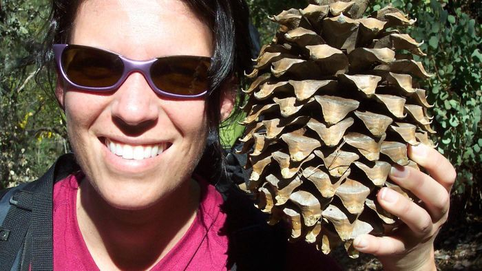 What Are Some Large Pine Cone Crafts?