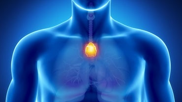 Why Does the Thymus Gland Shrink?