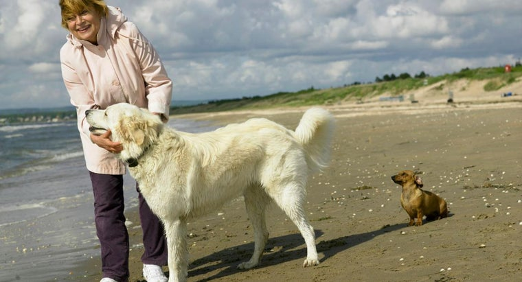 What Are the Friendliest Dog Breeds?