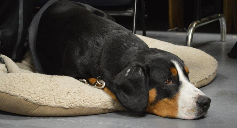 What Are Some Symptoms of Kennel Cough?