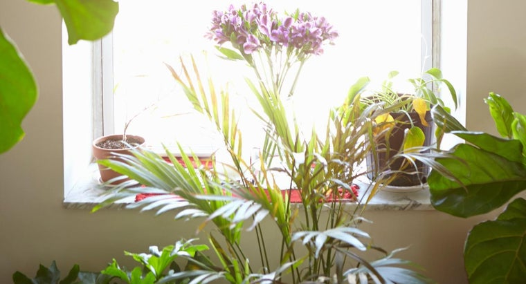 What Are Some Good Houseplants That Clean the Air?
