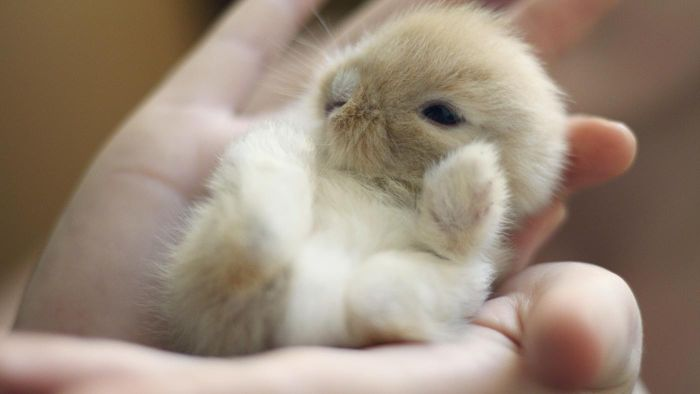 Do You Need to Be Trained to Feed Baby Rabbits?