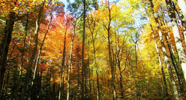 When Is a Good Time of the Year to See the Peak Fall Colors in Michigan?