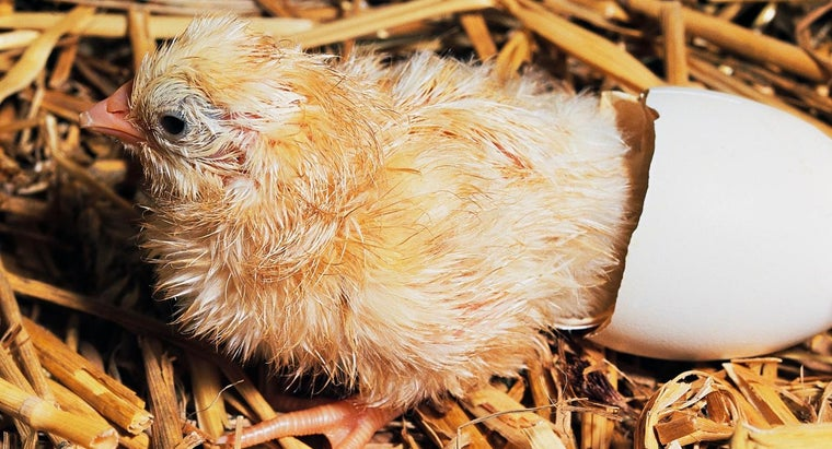 What Are the Specifications for a Chicken-Laying Box?