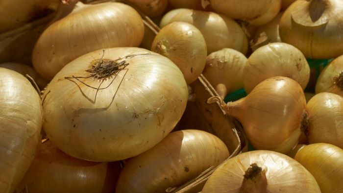 What Are Cipollini Onions?