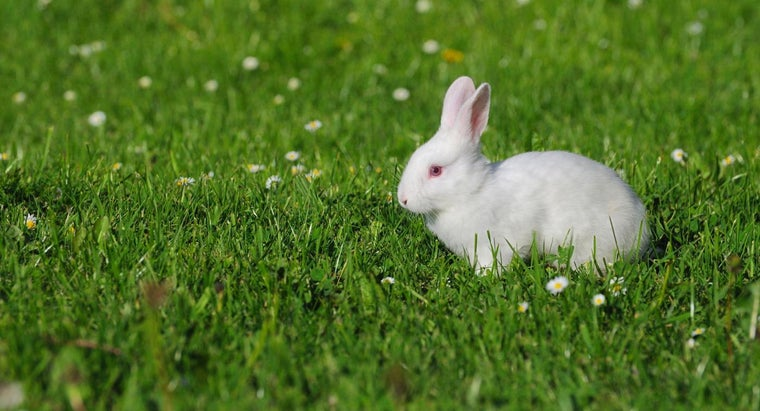 Where Can You Find Free Baby Bunnies?