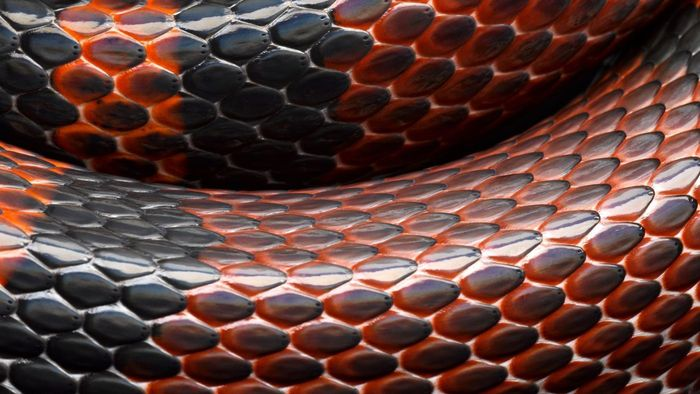 Where Can You Find Photographs of Snakes?