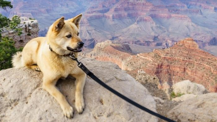 How Can You Find Akita Puppies to Adopt?
