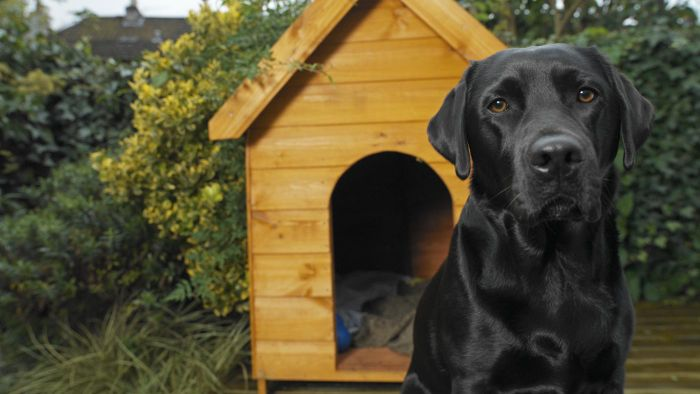 How can you heat a dog house safely?