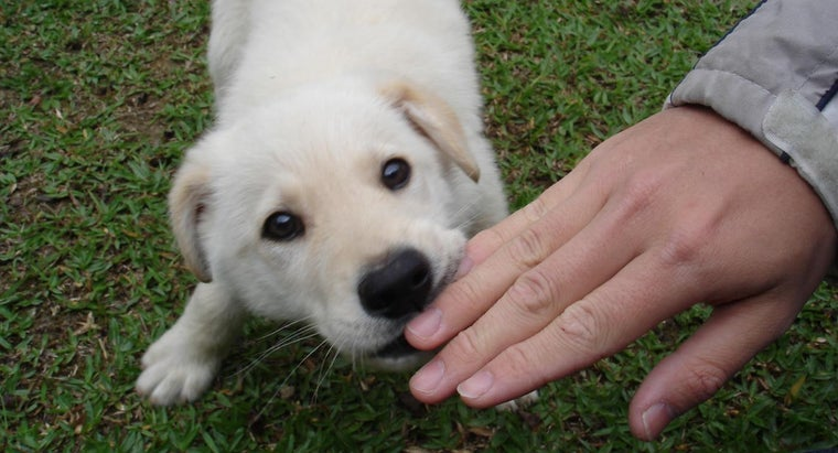 How Do You Train a Puppy to Stop Biting?