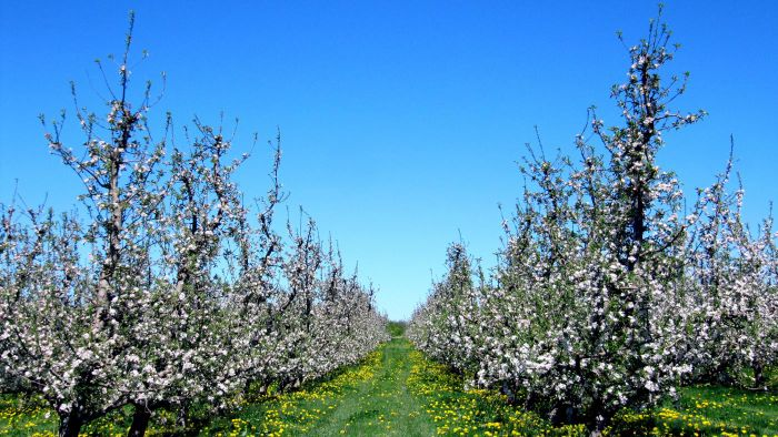 When Is the Best Time to Plant Fruit Trees?