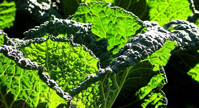 What Are Some Vegetables That Reduce Belly Fat?