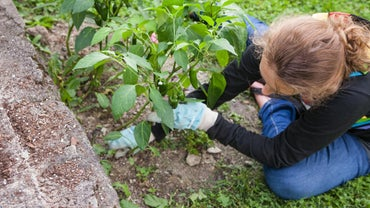 What Are a Few Tips for Using Vinegar As an Organic Weed Killer?