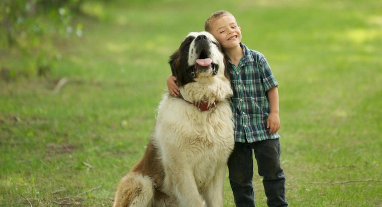 What Are Some Cute Names for Large Breed Dogs?