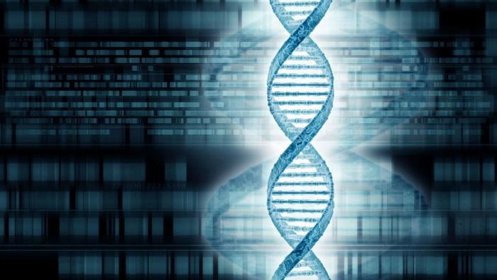 What Is Family Tree DNA?