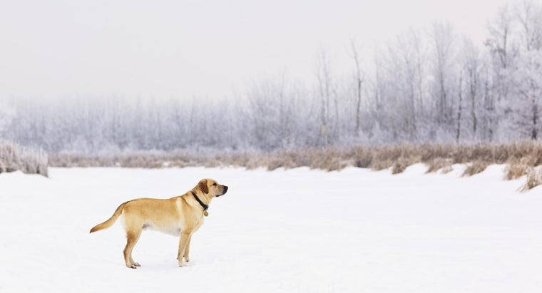 What Are Some Labrador Male Dog Names?