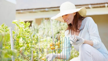 How Do You Prune Tomatoes?