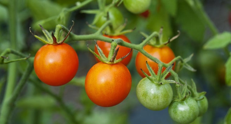 What Soil Mixture Is Good for Tomato Growing?