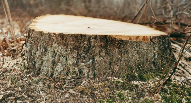 How Can You Kill a Tree Stump?