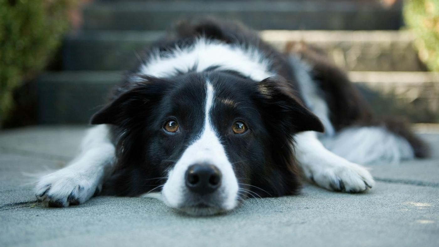 How To Treat An Upset Stomach In A Dog