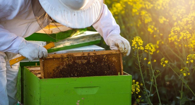 How Do You Build a Beehive Box?