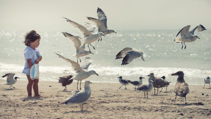 What Do Seagulls Look Like?