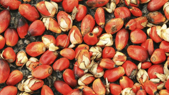 What Are the Benefits of Red Palm Oil?
