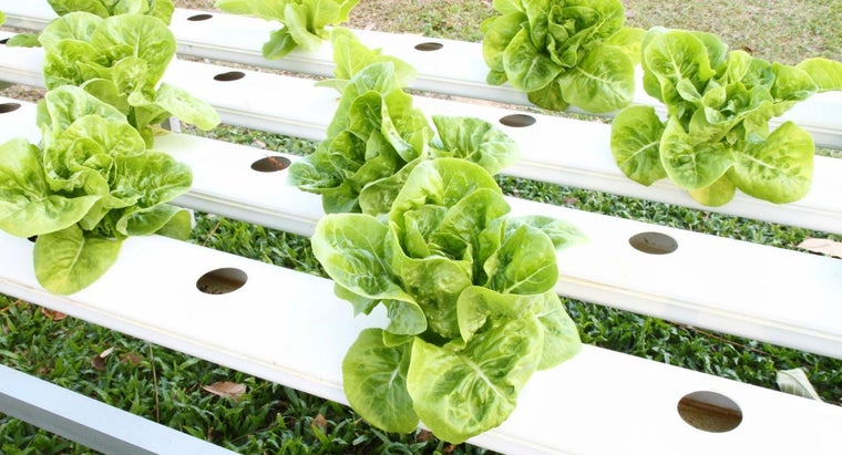 How Does a Hydroponic Growing System Work?