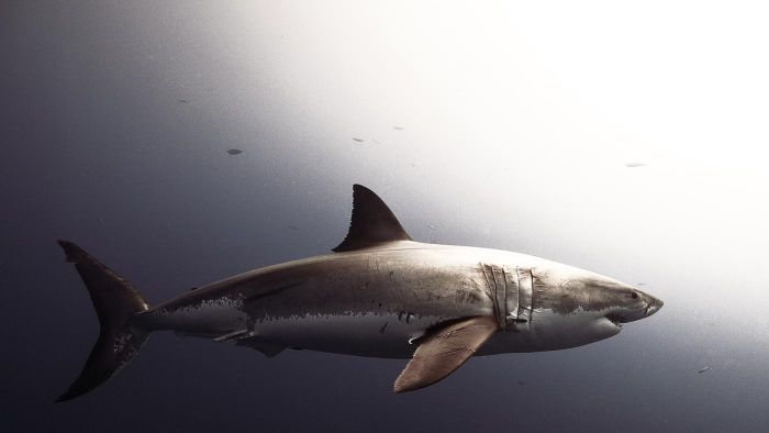 Where Are There Shark Attack Games to Play Online?
