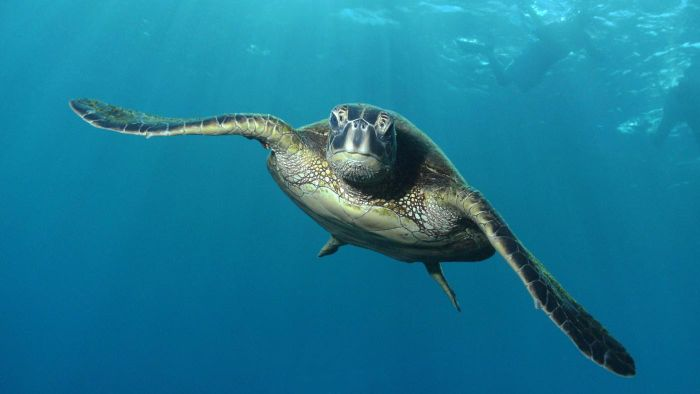 What Do Green Sea Turtles Eat?