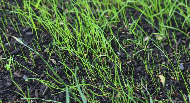 Is Fall or Spring a Good Time to Seed a Lawn?