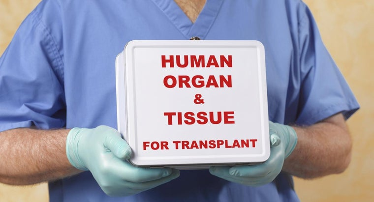 What Is a Liver Transplant?