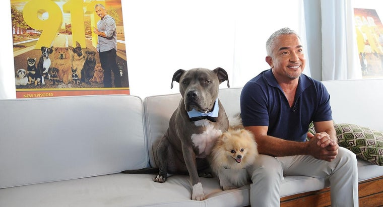 Why Did Cesar Millan Get a Divorce?