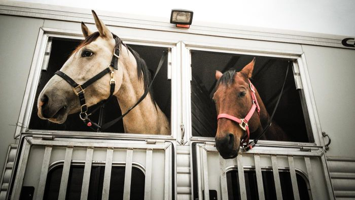 Where Can You Find a Used Two-Horse Trailer for Sale?