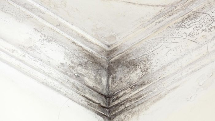 How Do You Clean up Black Mold?
