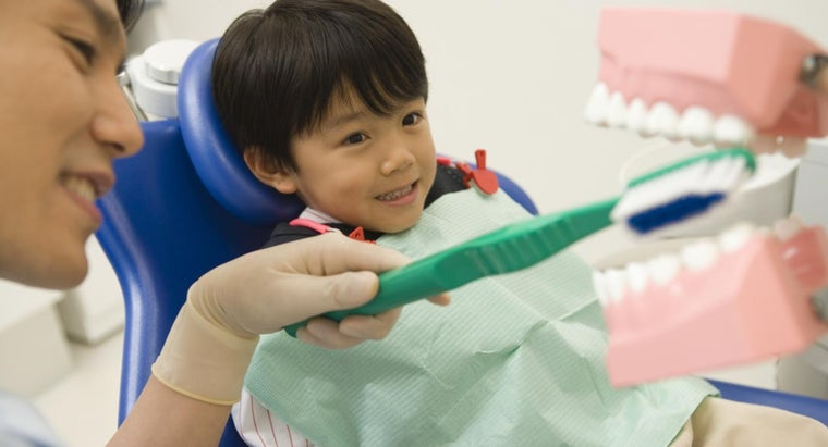 How Do Dentists Identify the Different Teeth?