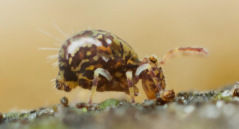 How Do You Get Rid of Springtails in Your House?