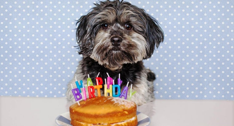 What Are Some Birthday Cake Recipes for Dogs?
