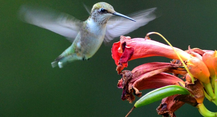 How Do You Mix a Water and Sugar Solution for Hummingbirds?