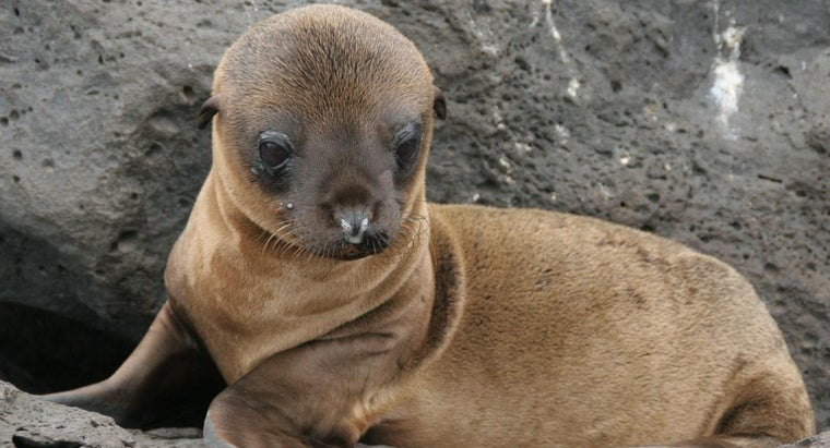 Are Sea Lions an Endangered Species?