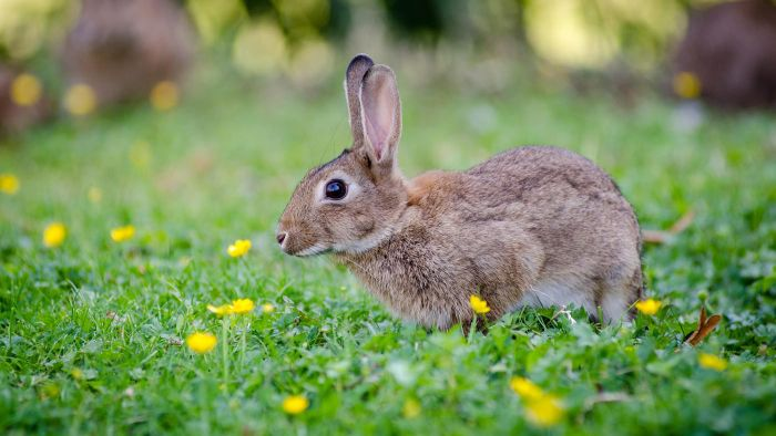 What Are Some Interesting Facts About Rabbits for Kids?