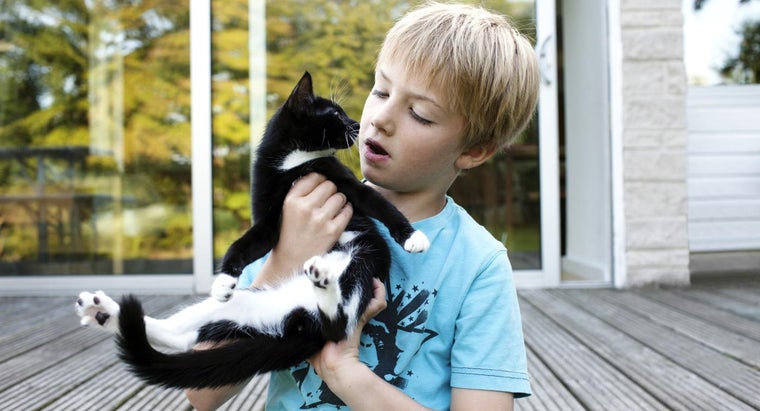 What Are Some Facts About Cats for Kids?