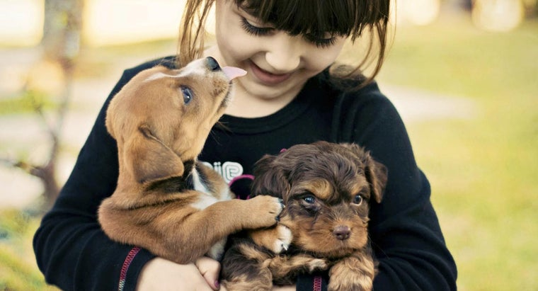 What Are Some Unique Puppy Names?
