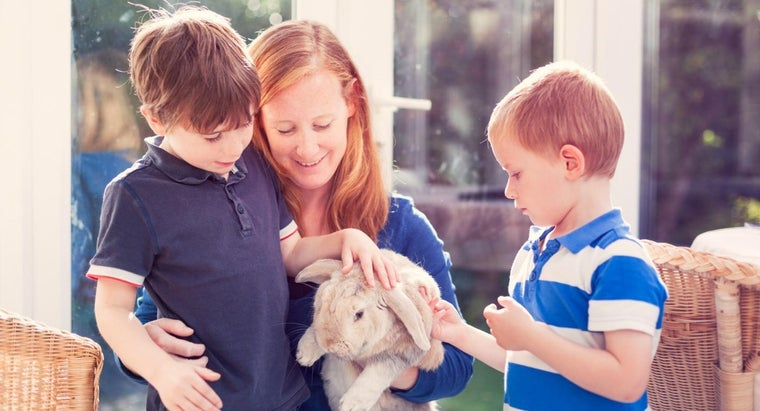 What Are Some Popular Small Pets for Kids?