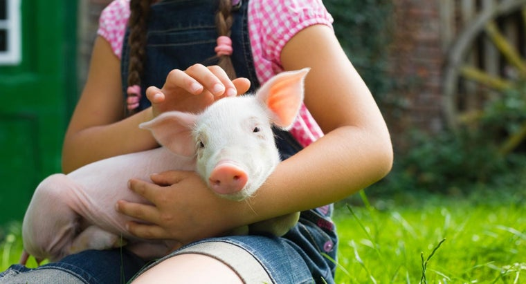 What Are Some Fun Pig Facts for Kids?