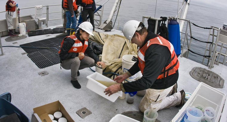 What Are Some Colleges That Offer a Degree in Marine Biology?