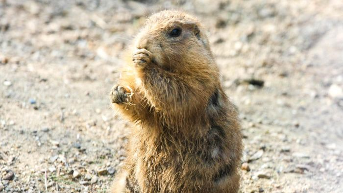 What type of locations are ideal for hunting prairie dogs?