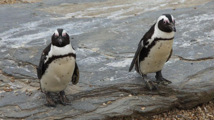 What Are Some Interesting Facts About Penguins?